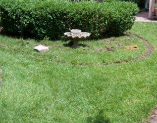 barbs-birdbath-planter-finegardening