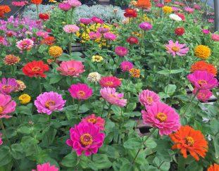 keys-to-gardening-success-vancouver-sun
