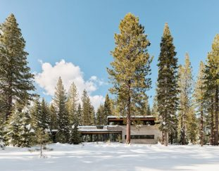 the-forest-house-disappears-into-its-natural-surroundings