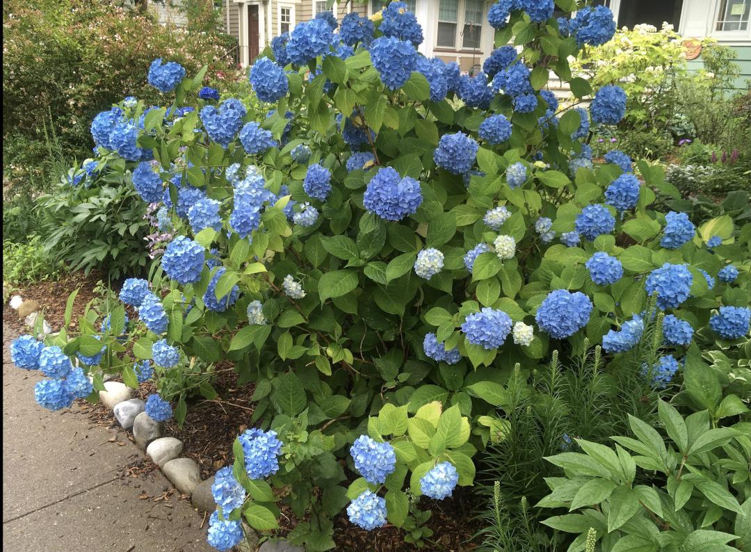 roses-new-jersey-garden-finegardening