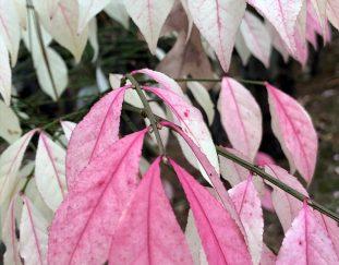 garden-photos-from-maureen-finegardening