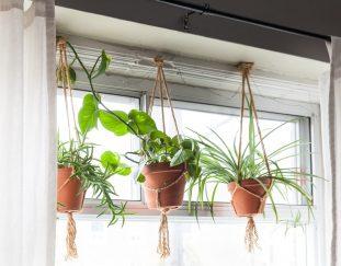 best-stylish-indoor-hanging-planters-2021