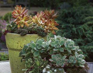 gorgeous-garden-container-designs-tips-and-inspiration