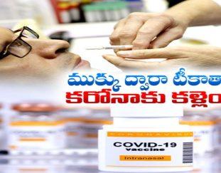 study-claims-nasal-covid-vaccine-prevents-disease-zero-virus-spread-2