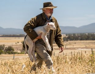 rams-review-ailing-sheep-and-quirky-characters