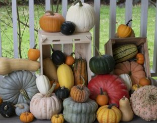brian-minter-plant-easy-to-grow-squash-for-food-security