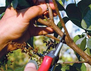 pruning-tools-and-techniques-finegardening