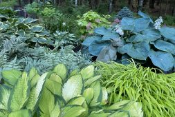 shelleys-upstate-new-york-garden