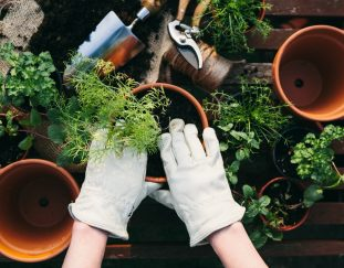 the-cutest-gardening-accessories-to-help-you-get-your-green-thumb-on-right-now