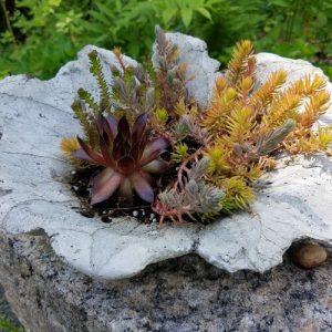 Casting a Concrete Leaf Planter