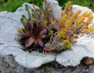 casting-a-concrete-leaf-planter