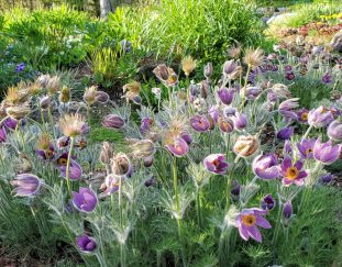 sandis-vermont-garden-finegardening