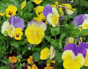 marys-spring-garden-finegardening